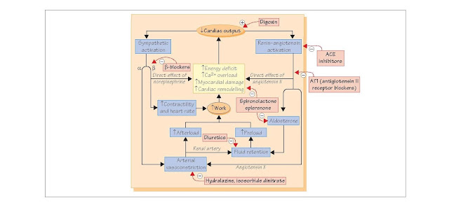 Treatment Of Chronic Heart Failure, renin–angiotensin–aldosterone, angiotensin-converting enzyme inhibitors, Angiotensin receptor blockers, dobutamine, dopamine, ACEI and other vasodilators, β-Receptor blockers, Aldosterone antagonists, Cardiac glycosides,
