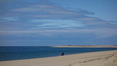 麻州鱈魚角Cape Cod遊記 (Part 3: Province land至Race point lighthouse)