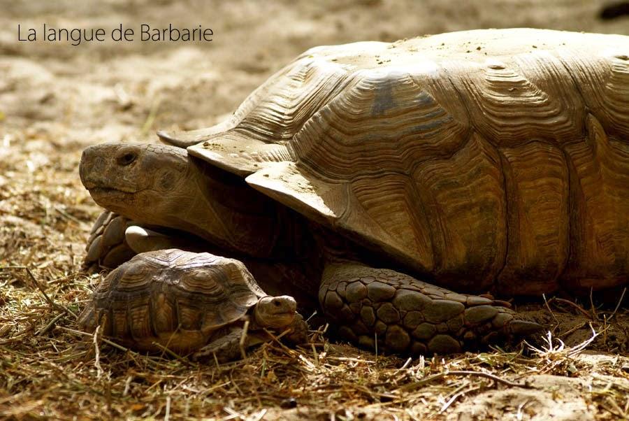 http://cherryvegzombie.blogspot.fr/2012/01/parc-de-la-langue-de-barbarie-senegal.html