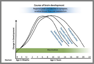 synapse density