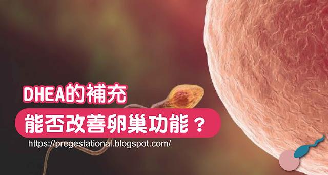 DHEA的補充,能否改善卵巢功能?