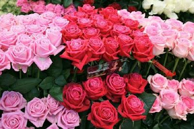 11 Manfaat Bunga Mawar untuk Kesehatan