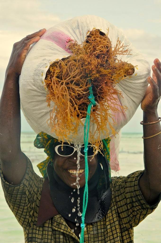 zeewier zanzibar indische oceaan