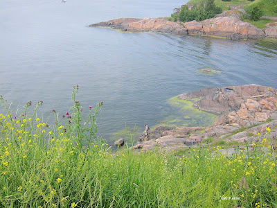Gulf of Finland beyond mustards and thistles