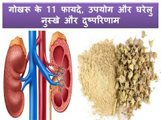 gokhru-uses-in-hindi-kidney