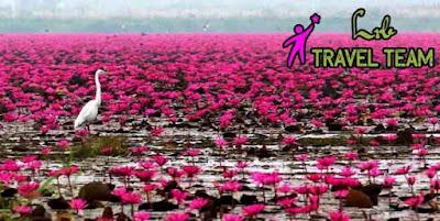 satla village, barisal satla village, water lily