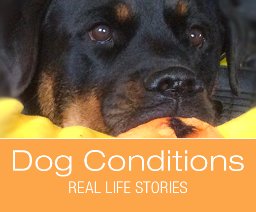 Dog Conditions - Real-Life Stories - New Theory About Cookie's Leaks: Update