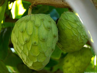 Cherimoya fruit images wallpaper
