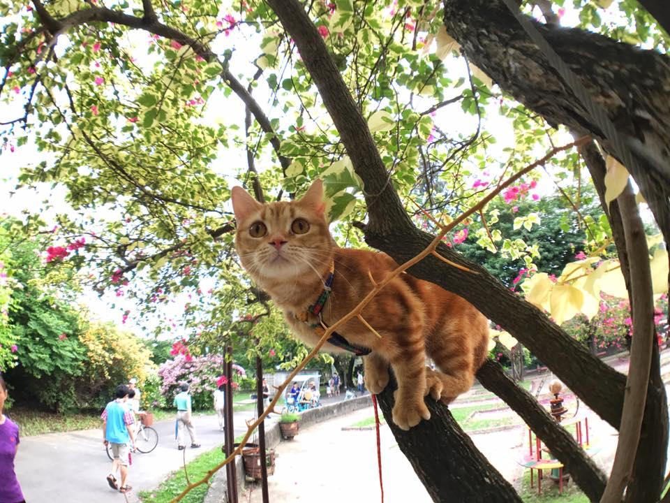 Kucing Memanjat