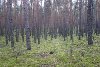 soczysta zieleń na szlaku żółtym do Wierszy