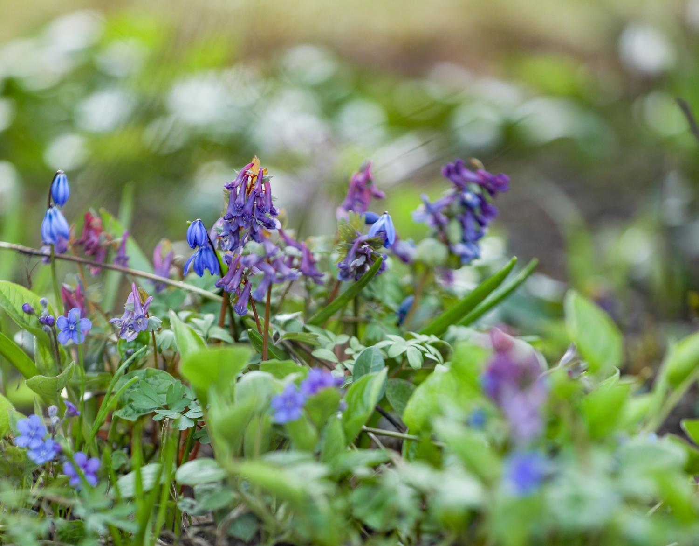 kevään-kukkia-100outdoor