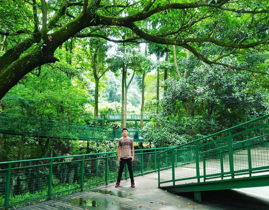 Forest walk wisata bandung populer