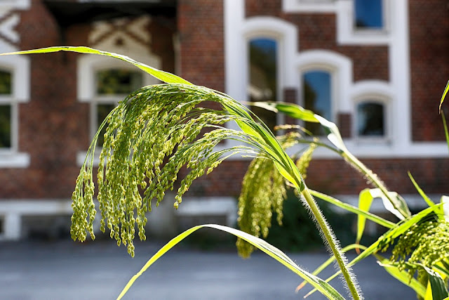 Fase Pertumbuhan dan Perkembangan pada Tumbuhan