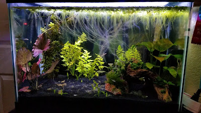 20-gallon jungle style planted tank