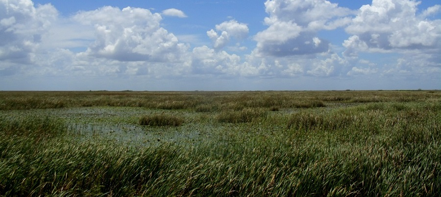 Ciénagas en el sureste de la Florida