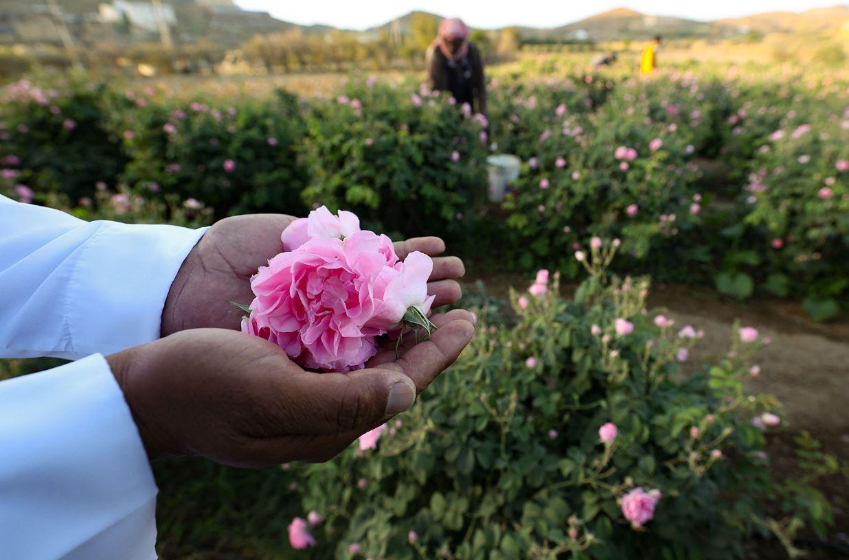 مدينة الورود في السعودية تزدهر في أيام العيد