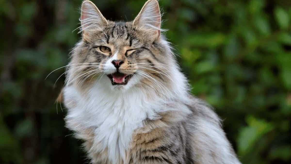 gato guiñando el ojo y sonriendo