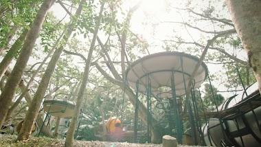 森林方舟 導演版 Forest Ark-商業影片|宣傳片|影像工作室|紀錄片|電商短片|訪談