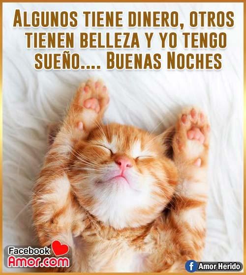 imagen de buenas noches de gato