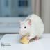 A edição de genes pode um dia ser usada para tratar a obesidade?