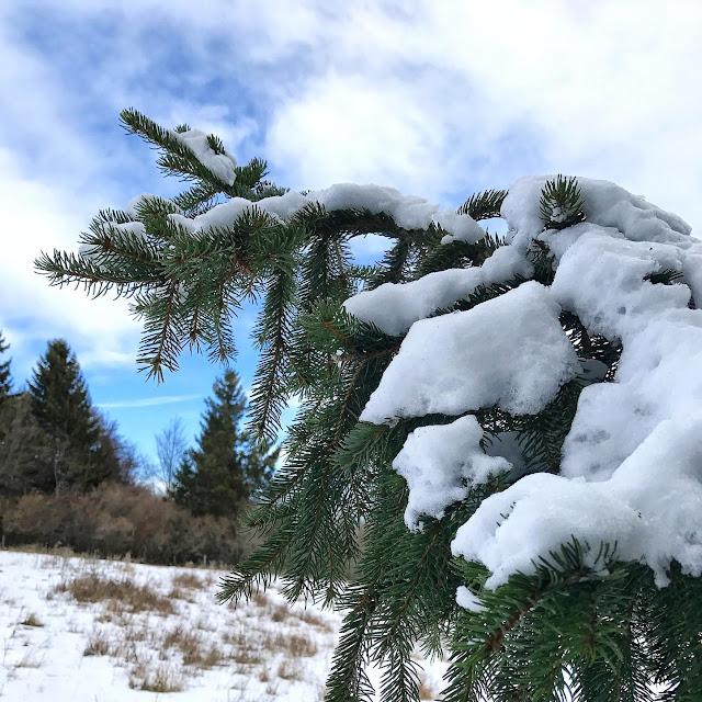 La nature et sapin au Mont Salève