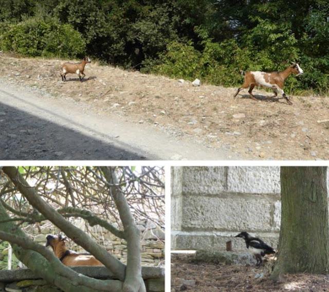 animali sull'Isola Palmaria