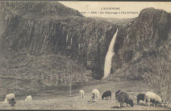 Moutons à Falhitoux, Cantal