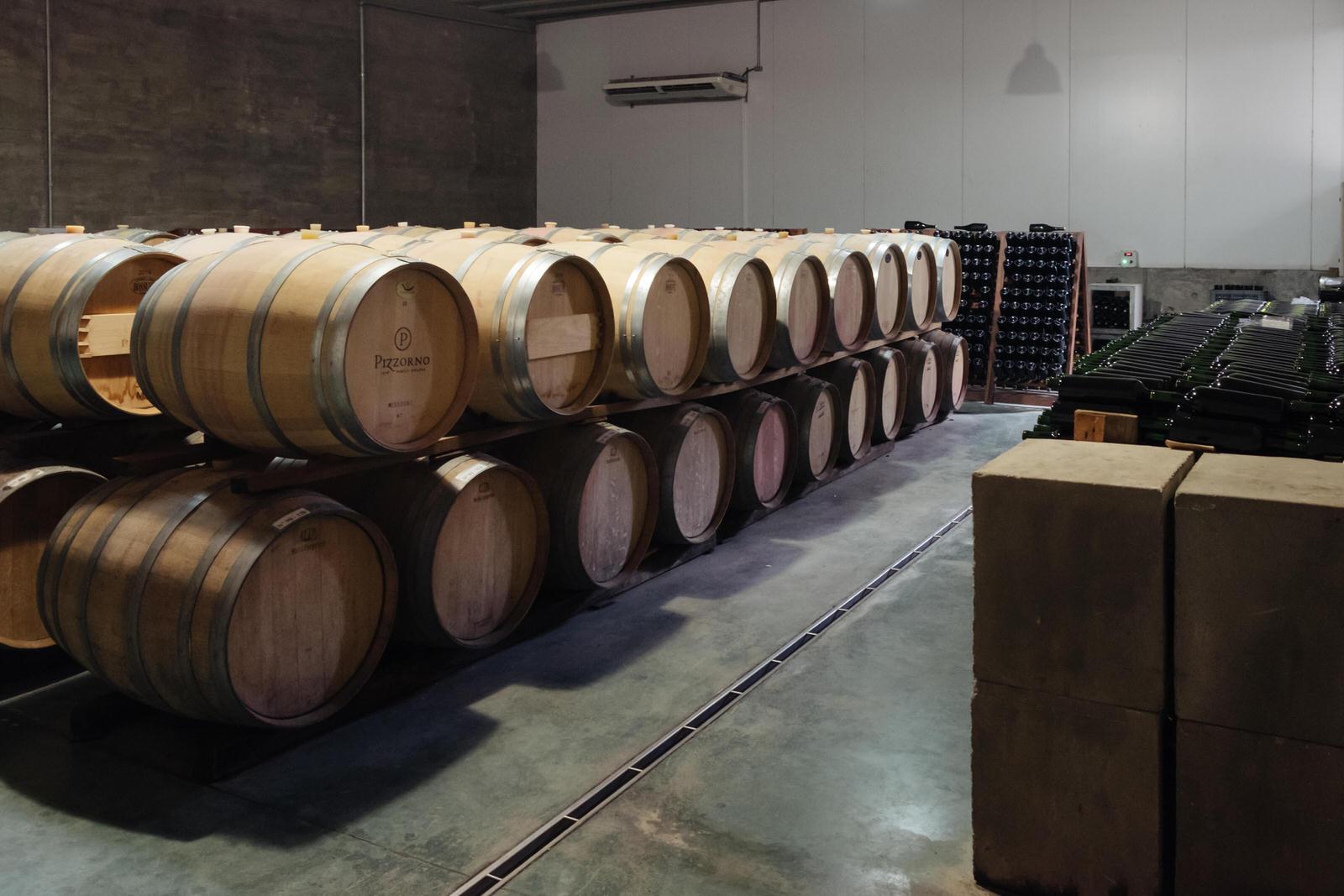 Visita a vinicola Pizzorno no Uruguai
