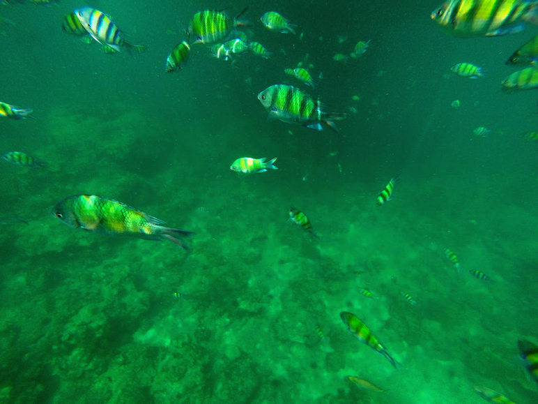 fish underwater maya bay thailand