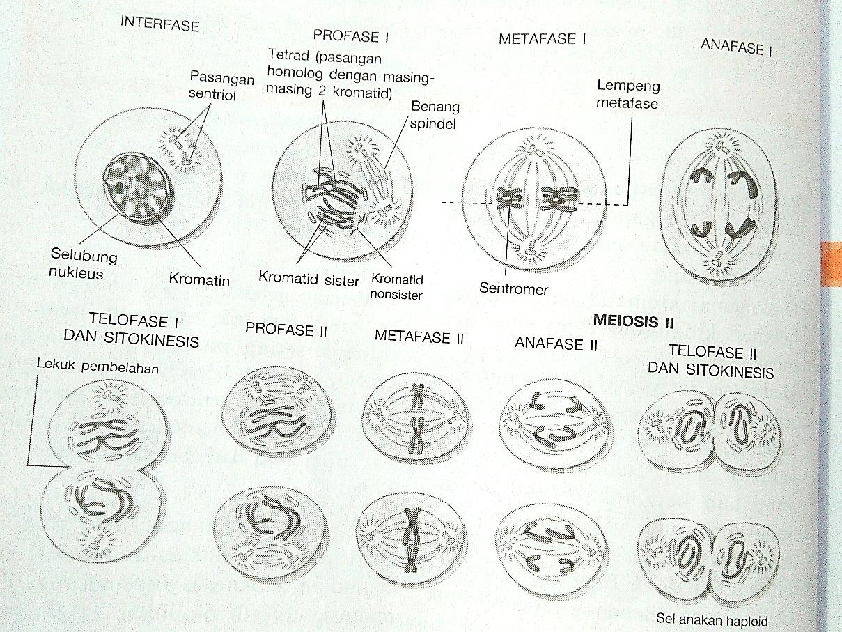 Serba Serbi Biologi