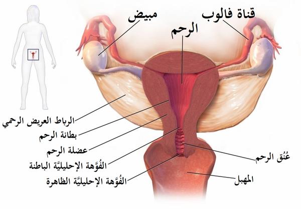 التهاب الحوض و الخصوبة