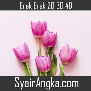 Erek Erek Bunga Tulip 2D 3D 4D