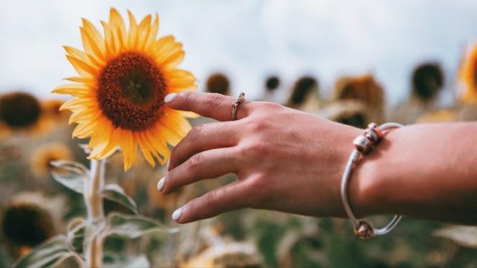 Fotografia, Mão, Girassol, Flor, Natureza
