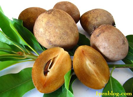 manfaat buah sawo untuk kesehatan dan kecantikan