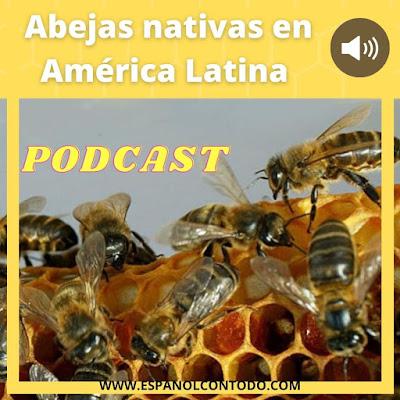 Abejas nativas en América Latina