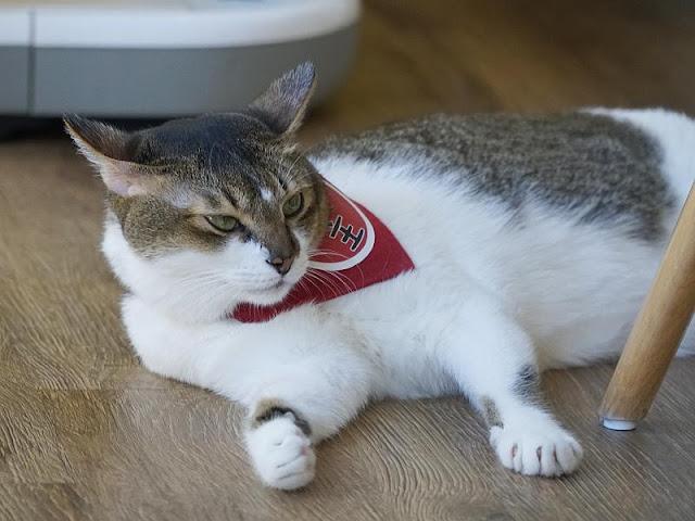 Fat Cat Cafe Grand Lake Menu