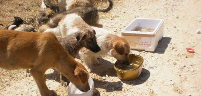"""Δήμος Ερμιονίδας: Οδηγίες για την εκτύπωση """"Βεβαίωσης μετακίνησης για σίτιση αδέσποτων ζώων"""""""