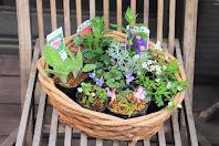 山野草の盆栽の教室で使ういろいろな種類の花苗