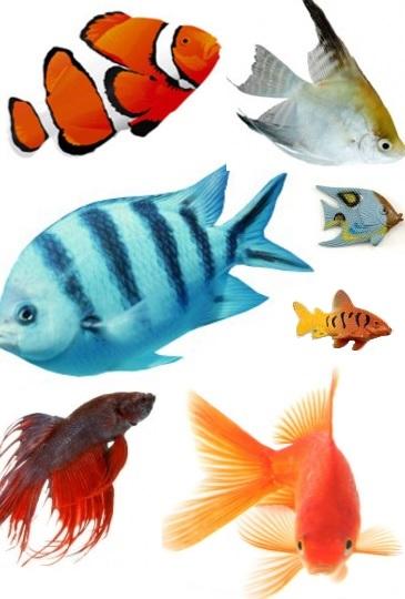 Foto de una variedad de peces de distintos colores