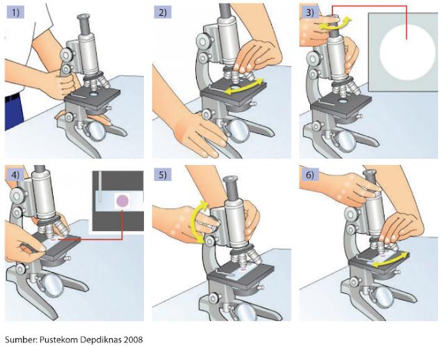 Cara Kerja Mikroskop