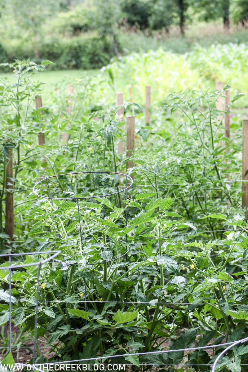 using a trellis system to support tomato plants | On The Creek Blog // www.onthecreekblog.com