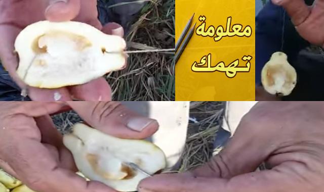 طريقة تطعيم الجوافة فى السنار
