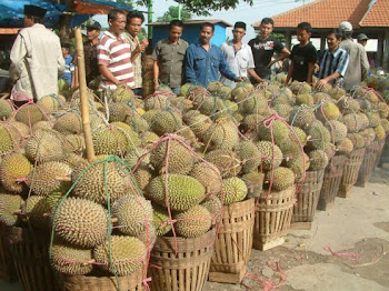 10 Tips Pilih Durian