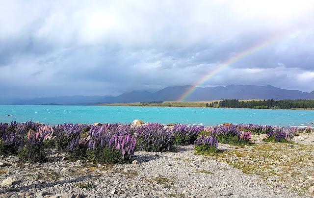 Nuova Zelanda foto natura