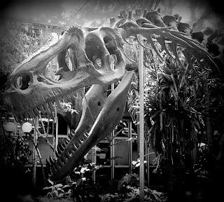 Esqueleto de Dinossauro no Prédio do Museu de Geociências da Usp - São Paulo