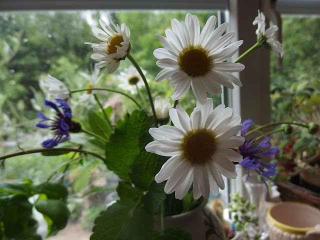A rustic posy of ox-eye daisy, perennial cornflower and lemon balm on our kitchen windowsill