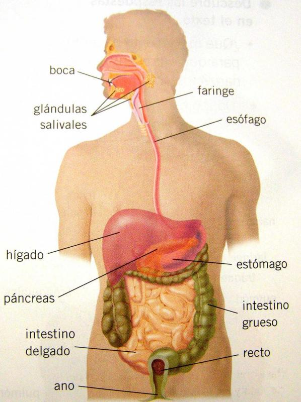 Anatomía: Aparatos de la Anatomía Humana