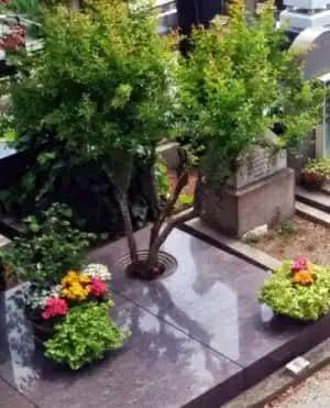 Tree coffins