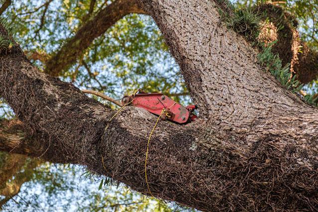 Macaco no alto de uma árvore