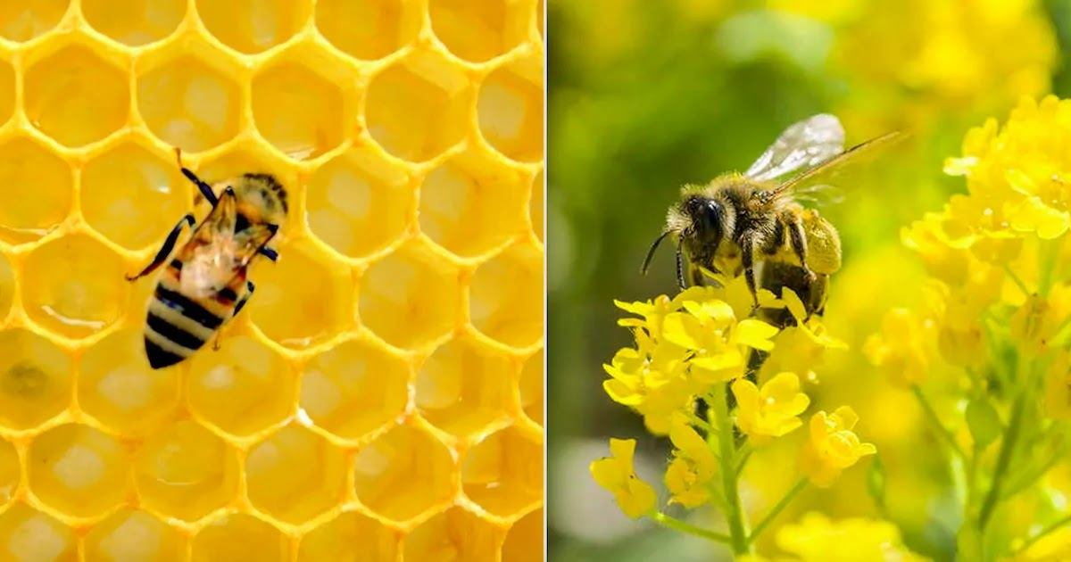 Bee Populations In The US Increase By Up To 73% After The Banning Of NNI Insecticides